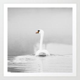 Swan and mist Art Print