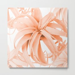 Coral Color Air Plant White Background #decor #society6 #buyart Metal Print