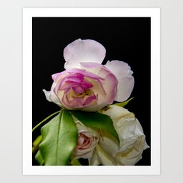white and pink roses Art Print