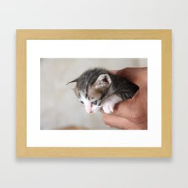 Meow. Framed Art Print