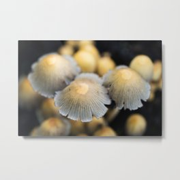 Shaggy Ink Cap Mushrooms 4 Metal Print