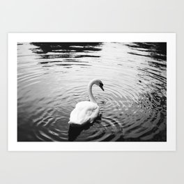 The Lonely Swan of Dublin, Ireland - Black and White Art Print