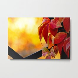 Autumn red vine leaves and yellow background Metal Print