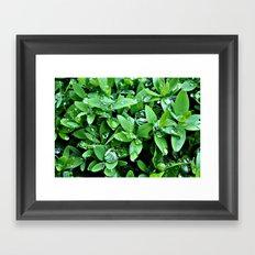 Raindrops on Green Leaves Framed Art Print
