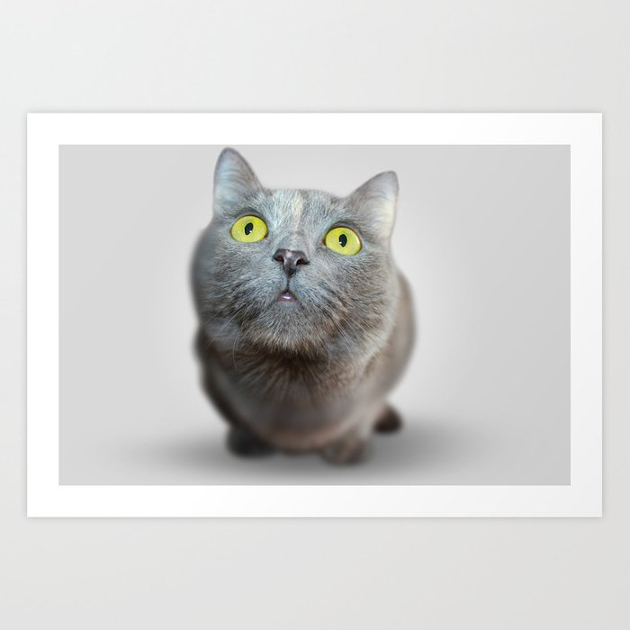 The Cat's Stare Art Print