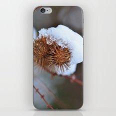 Snowy Burrs iPhone & iPod Skin