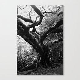 The Black Tree Canvas Print