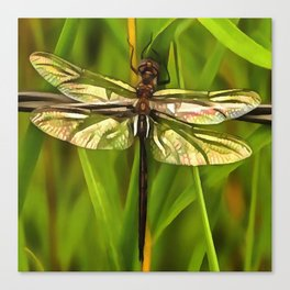 Dragonfly In Brown And Yellow Canvas Print