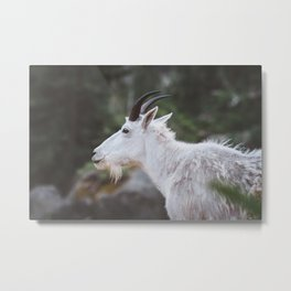 Mountain Goat in Black Hills National Forest Metal Print