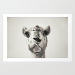 Camel Art Print
