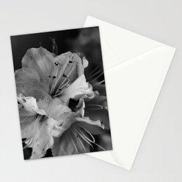 Timeless Black & White  Stationery Cards