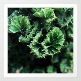 Emerald green Cactus Botanical Photography, Nature, Macro, Art Print
