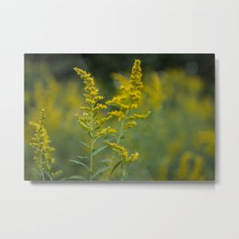 Goldenrod Blooms Metal Print