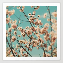 Cherry Blossoms photo. Cotton Candy Art Print