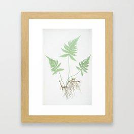 Botanical Beech Fern Framed Art Print