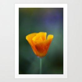 California Poppy Art Print