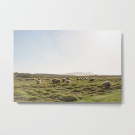 SHEEP'S MEADOW Metal Print