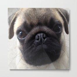 Pug Hi Metal Print