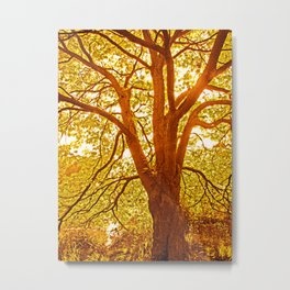 Tree of love and live in golden light Metal Print