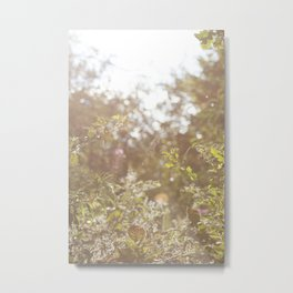 English Wild Flowers at Dusk Metal Print