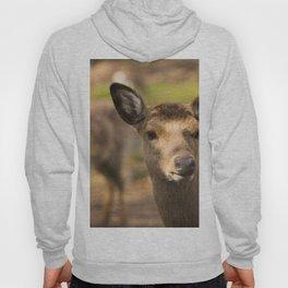 Deer cow looks around the corner Hoody