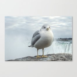 Seagull Model Canvas Print