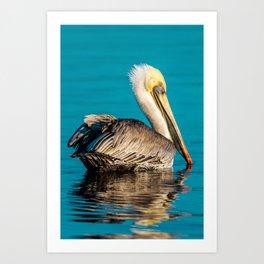 Bird - Brown Pelican - Study 5 Art Print