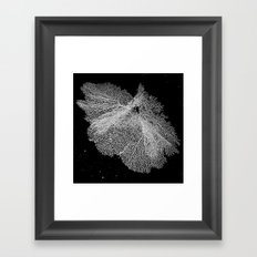 Fan Coral Framed Art Print