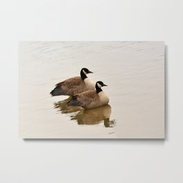 Pair of Ducks Metal Print