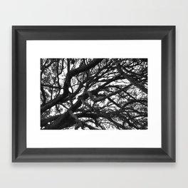 Tangled Up Framed Art Print