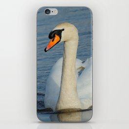 Elegant Mute Swan in the Harbor iPhone Skin