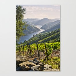 Vineyards along the Douro Valley, Portugal Canvas Print
