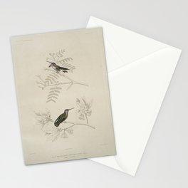 2211 Oiseau mouche costa Ornismya costa 1 Male 2 Femelle26 Stationery Cards