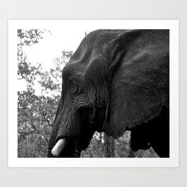 Grand Elephant-One Art Print