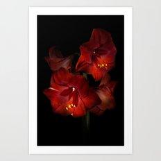 Scarlet Amaryllis Art Print