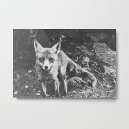 FOXY III Metal Print