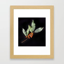 Silver Berry Framed Art Print