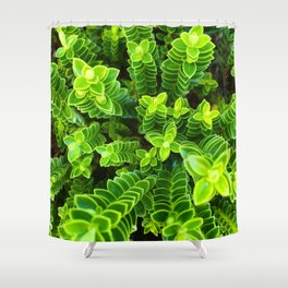 Green plant Shower Curtain