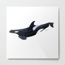 Orca killer whale Metal Print