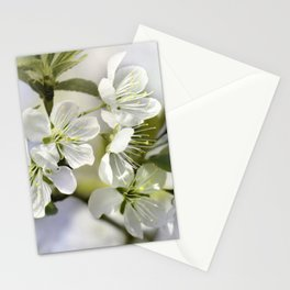 Spring white 044 Stationery Cards