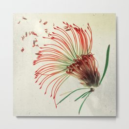 Nodding Pincushion Botanical Blueprints Metal Print