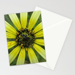 Ombre Daisy Stationery Cards