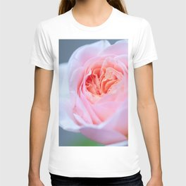 Forever in Love - Pink Rose #1 #decor #art #society6 T-shirt