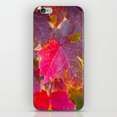 Fall Party iPhone & iPod Skin