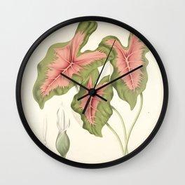 Caladium bicolor Wall Clock