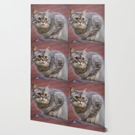 British shorthair cat on the wall Wallpaper