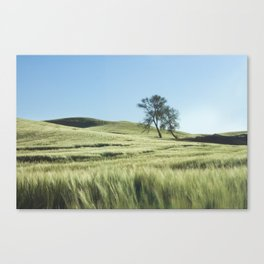 Lone Tree Photography Print Canvas Print