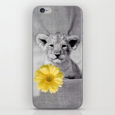 Young lion iPhone & iPod Skin