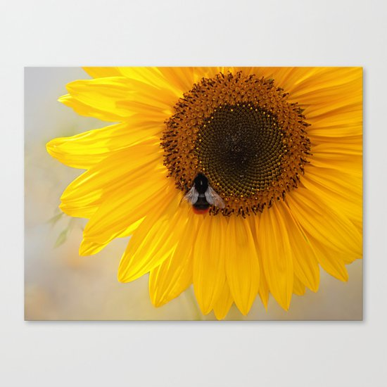 The Bee and the Sunflower Canvas Print