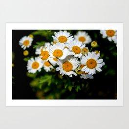 """Wild Flowers"" Art Print"